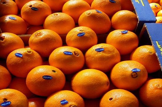 رغم حرب البطاطس...الصادرات الزراعية تقفز إلي 4 ملايين و438 ألف طن خلال 10 شهور