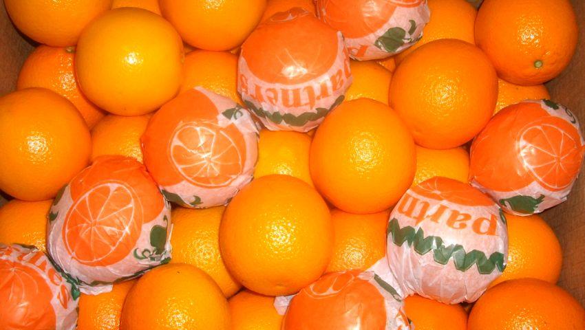الحجر الزراعي يكشف أسباب إقبال الصينيين علي إستيراد البرتقال المصري