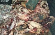 نكشف تفاصيل ضبط 40 طن لحوم فاسدة في محافظة المنوفية ... والزراعة تتوعد المخالفين