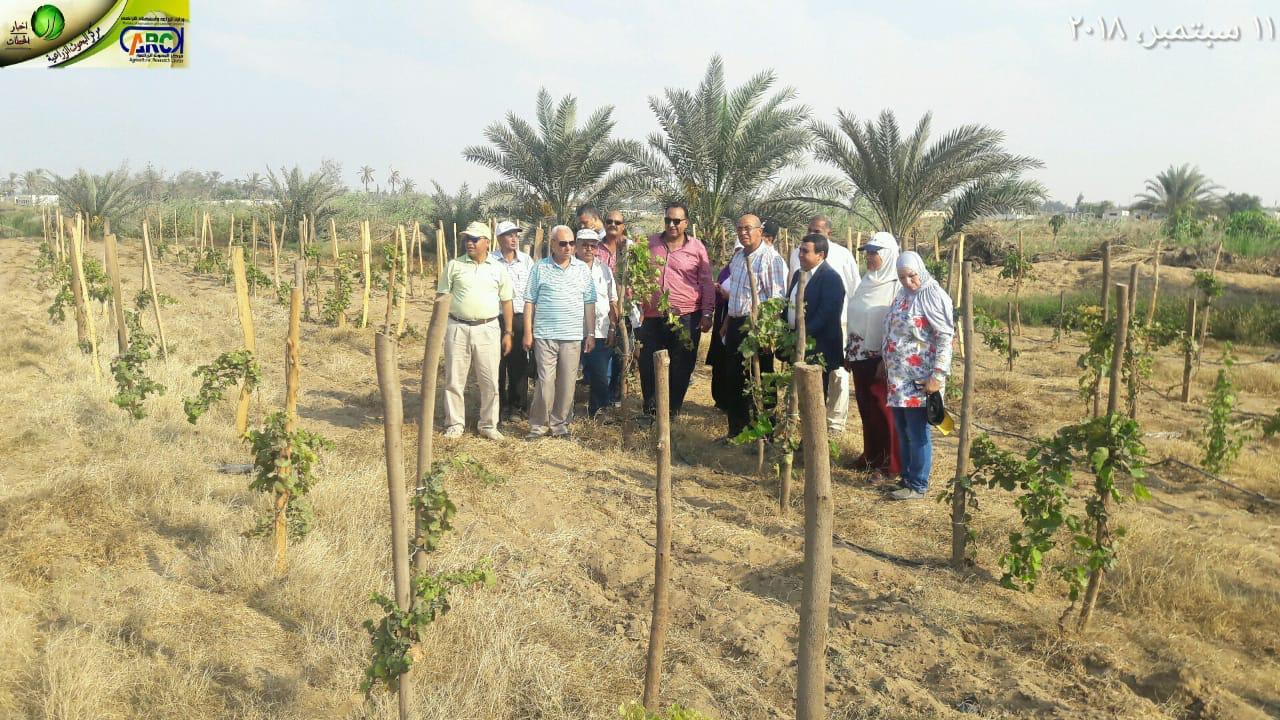 مركز البحوث الزراعية ينجح في إستحداث طريقة جديدة لزيادة إنتاجية العنب 50% (صور)