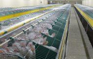 عالم الارانب 6 أنواع تحظي بالإنتاج الكبير إحداها تنجب 84 أرنب في عام