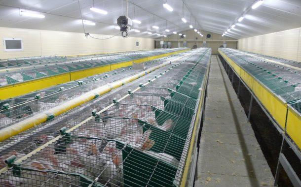 وزير الزراعة: قرار تنظيم تربية الأرانب يستهدف حماية صناعة كانت منسية