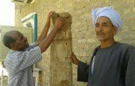 الزراعة تعتمد إجراءات عاجلة للسيطرة على النمل الأبيض في 15 محافظة (صور)