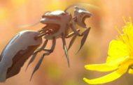 تعرف على أول نحلة آلية ذاتية التحكم !