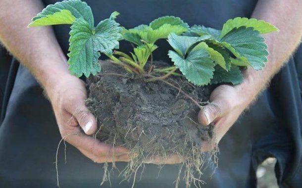 تعرف على خطوات التسميد الصحيح لمحصولك الزراعي لتحقق إنتاجية اعلى