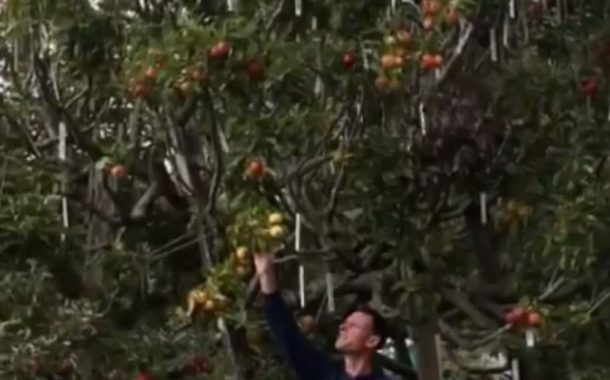 بالفيديو .. شجرة سحرية تنتج 40 صنفا مختلفا من الفاكهة !