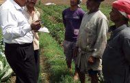 لجان لمكافحة الآفات إستعدادا لزراعة الفراولة في محافظة القليوبية