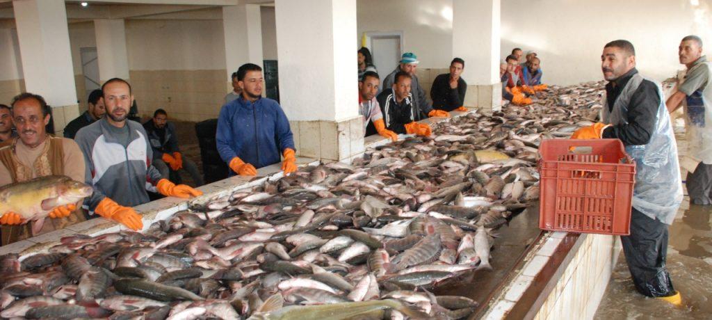 أسعار السمك اليوم السبت 16-2-2019 فى الاسواق .. تعرف عليها