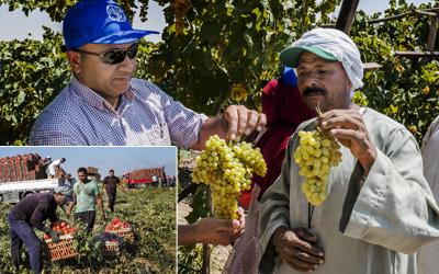 أخطر تقرير أصدرته الفاو...مصر تفقد 55% من إنتاج الخضار والفاكهة