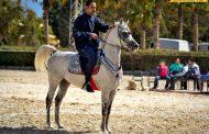 بدر شتيوي متحدثا عن جمال الخيول: الحصان العربي يتميز بـ 12 صفة وهو أقدم سلالات الخيول في العالم