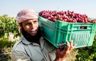 قصة نجاح من الفاو... كيف تنتج عنب أكثر جودة في مصر؟