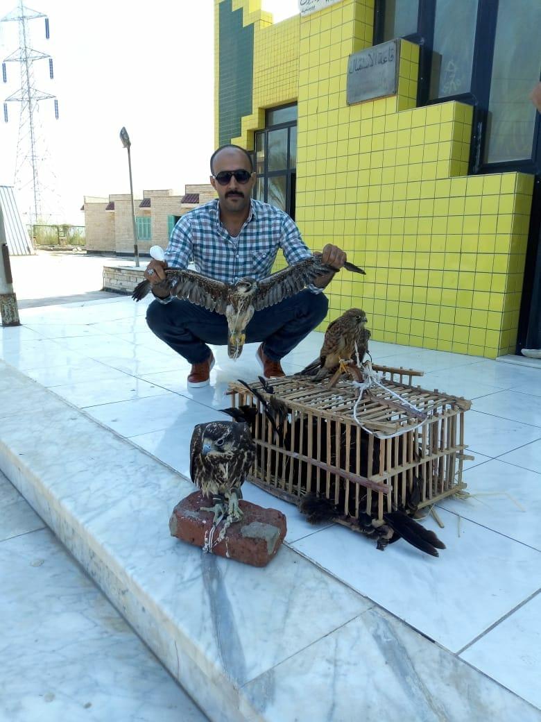 البيئة تنجح في إنقاذ الصقر شاهين من صيادي محمية أشتوم الجميل
