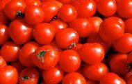 الصين تتوصل إلي هجين جديد من الطماطم يعيد المذاق الأصلي
