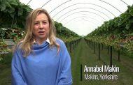 بالفيديو .. شاهد قصة نجاح فى زراعة الفراولة بالتقنيات الحديثة .. شاركنا نجاحك أيضاً
