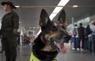 إجراءات أمنية مشددة لحماية كلب... عصابة ترصد 65 الف يورو لقتله