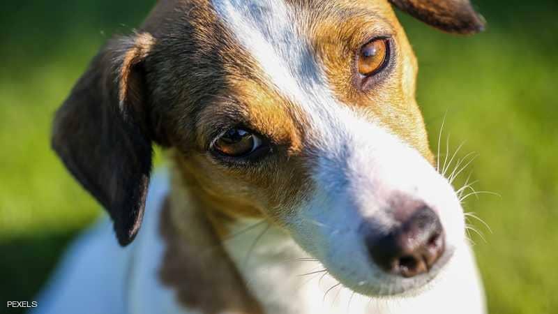هذا الكلب مطلوب حيا أو ميتا... تعرف علي الاسباب