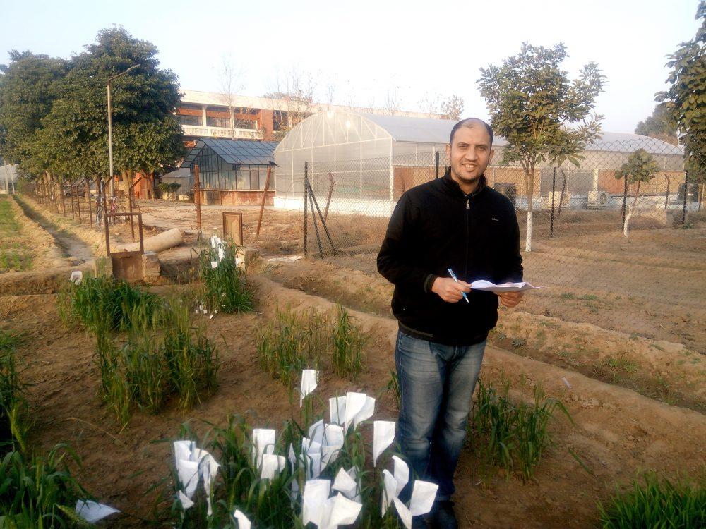 د أحمد القط يكتب: جينات المقاومة للامراض لتقليل الفاقد في القمح المصري