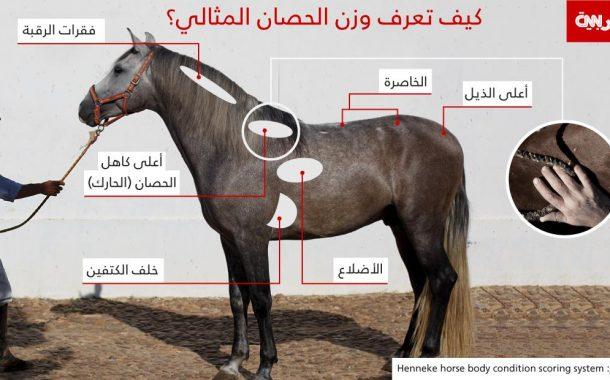 بهذه الطريقة يمكنك تقييم حالة حصانك الجسدية ووزنه المثالي .. فى عشر دقائق فقط