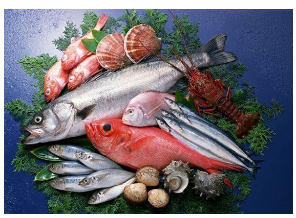 د أحمد عثمان يكتب: أهمية الأسماك كغذاء صحي والتعرف علي السمك الطازج والفاسد