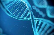 دراسة علمية: كل البشر من زوجين إثنين قبل 200 ألف عام