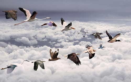 أخطر تقرير دولي: إنخفاض الحيوانات والطيور البرية والبحرية يهدد الزراعة في المنطقة العربية