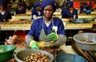 رئيس تنزانيا يقيل وزيرين لحماية مزارعي