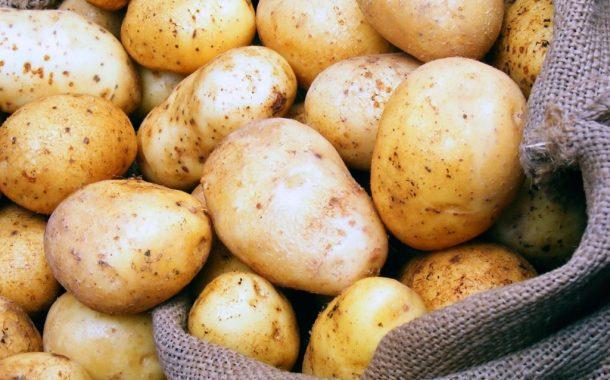 نقيب الفلاحين: سيناريو ارتفاع اسعار البطاطس لن يتكرر