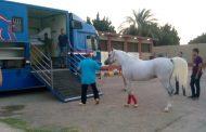 نائب وزير الزراعة: تصدير 6 خيول عربية إلي الأردن بعد توقف 8 أعوام