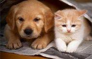 عاجل... 726 كلب وقطة خرجوا من البلاد بصحبة مالكيها خلال العام الحالي