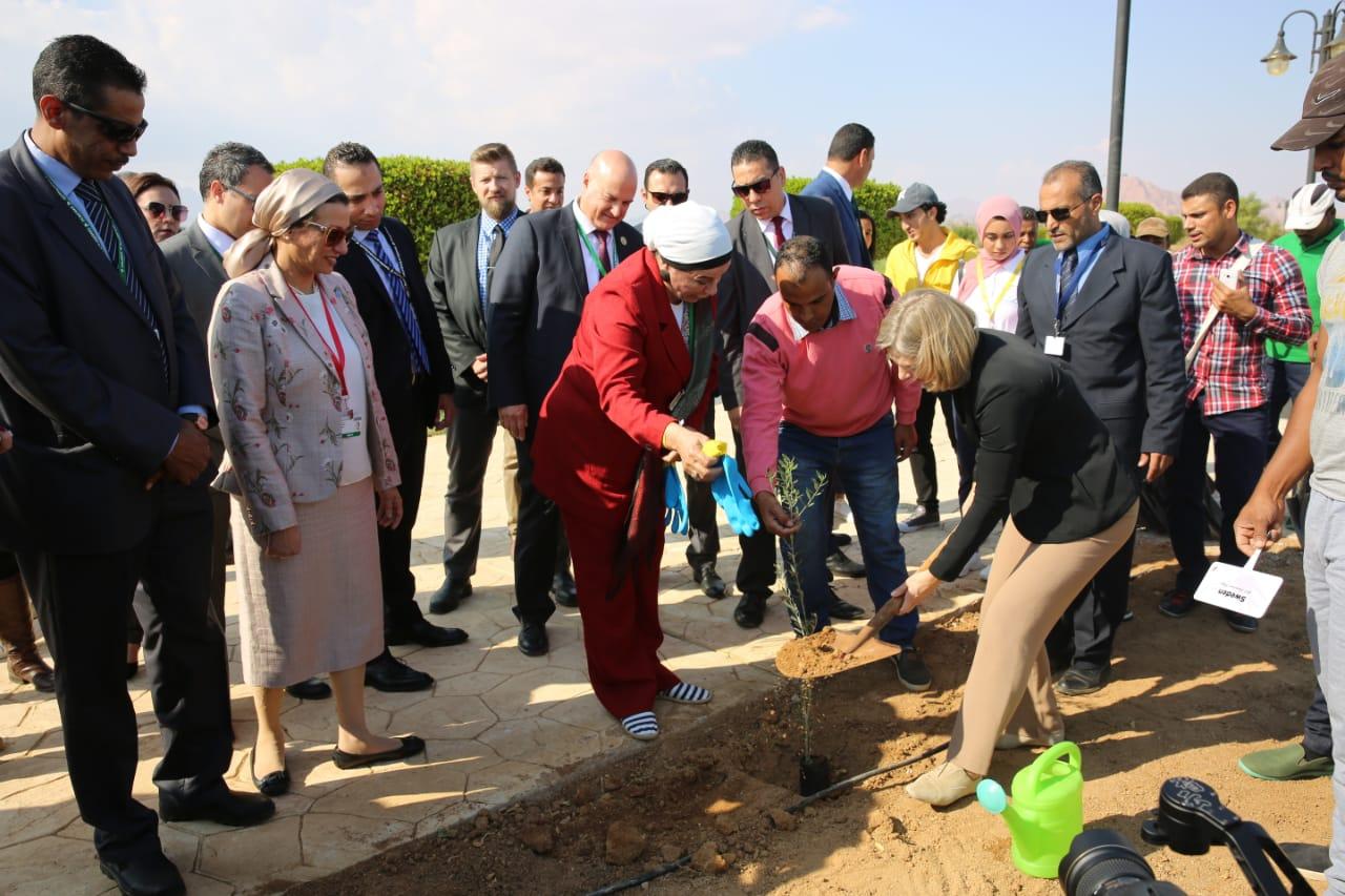 بالصور...وزراء بيئة العالم يزرعون أشجار الزيتون بحديقة السلام في شرم الشيخ