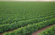دراسة علمية: الإرتباط بالأرض الخضراء والزراعة يقلل من إنتشار أمراض القلب في الريف
