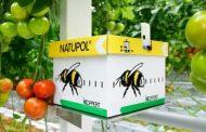 11 معلومة عن قطاع تربية النحل وإنتاج العسل في مصر