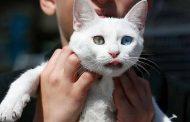 لاول مرة فرنسا تحذر من مخاطر الكلاب والقطط...(تفاصيل)