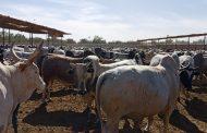 السعودية تعتمد شروط جديدة لإستيراد الحيوانات الحية ودخول الحيوانات الأليفة