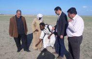 محمد حسن: مهنة قصاص الأثر تسهل أعمال رصد الجراد الصحراوي