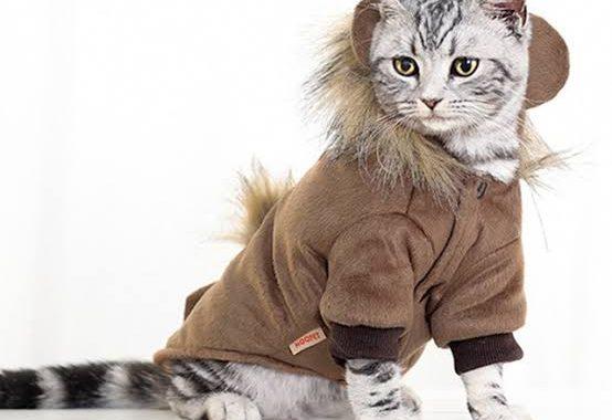 قطتك والشتاء .. هل هي مستعدة لذلك ؟