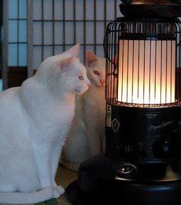 تأكد من تدفئة منزلك من اجل قطتك