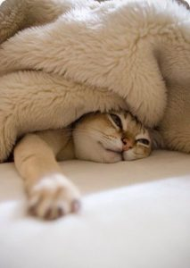 قم بتدفئة السرير التي تنام به قطتك