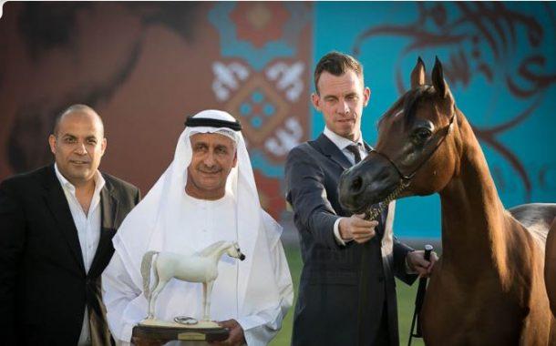 ننشر نتائج بطولة عجمان لجمال الخيول العربية الاصيلة (صور)