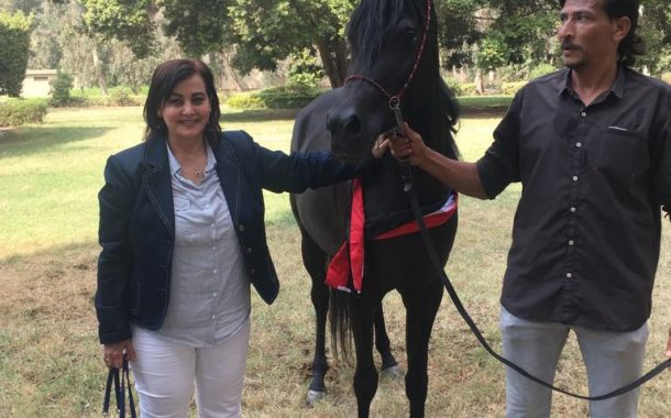 الاثنين ....دورات تدريبية بالمجان لمربي الخيول لتحويلها إلي صناعة واعدة