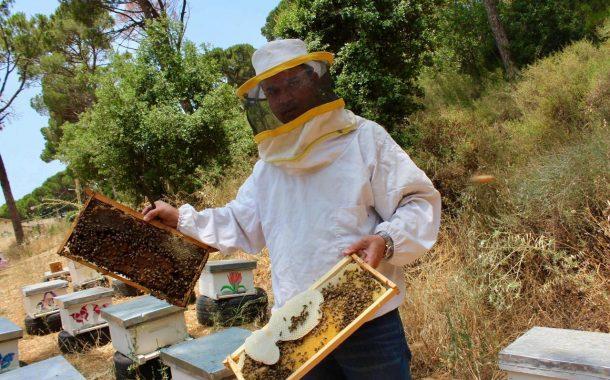 د منتصر صباح يكتب: ماهو الأسم الصحيح لعسل النحل؟