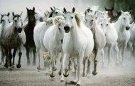 114.5 مليون دولار اجمالي استيراد مصر لخيول وحيوانات حية واسماك خلال 9 أشهر