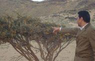 الزراعة ترفع من حالة التأهب القصوي لمواجهة أسراب الجراد علي الحدود المصرية السودانية