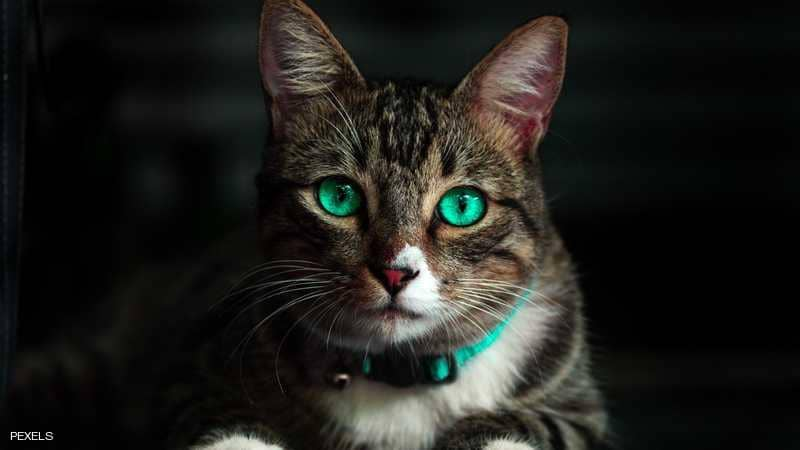محكمة تقضي بحبس مواطن بسبب قطة (تفاصيل)
