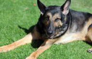 صورة للوفاء...كلب ينتظر أصحابه لمدة عام في موقف أتوبيس