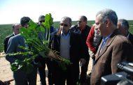 الزراعة تصدر تقريرا تفصيليا عن حالة إنتاج القمح والشعير و بنجر السكر والكانولا