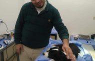 من المعادي إلي بنها...رحلة الحياه تنقذ كلبة من 3 أورام سرطانية