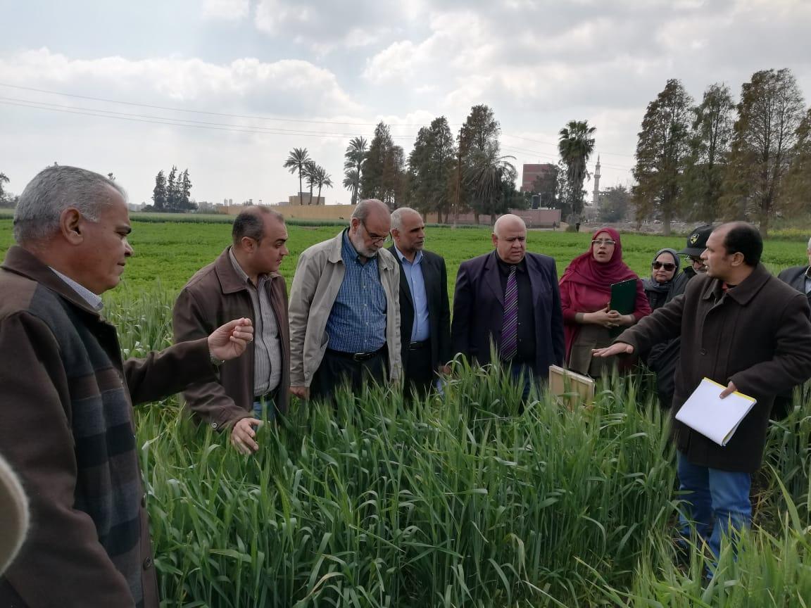 بالصور... الزراعة تطمئن على الحالة المرضية لمحصول القمح بمحافظة الشرقية