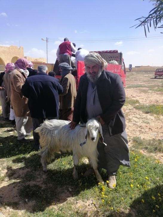 الفاو تسلم 40 رأس تيس دمشقي و30 وحدة لتجهيز الألبان والزبد لـ 70 مستفيداً بمطروح