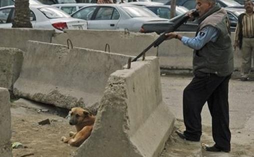 نقيب الفلاحين: شن حرب الكلاب